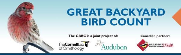 Audubon South Carolina: Great Backyard Bird Count Begins ...