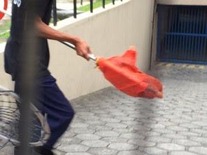Funcionários capturam gato na sede da prefeitura (Foto: Marcelo Elizardo/ G1)