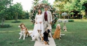 Couple Has Their Entire Bridal Party Made Of Dogs