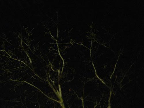 Trees at Night _ 9266