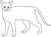 Gatto Disegni Da Colorare Di Gatti Informazioni E Curiosità Sui Gatti