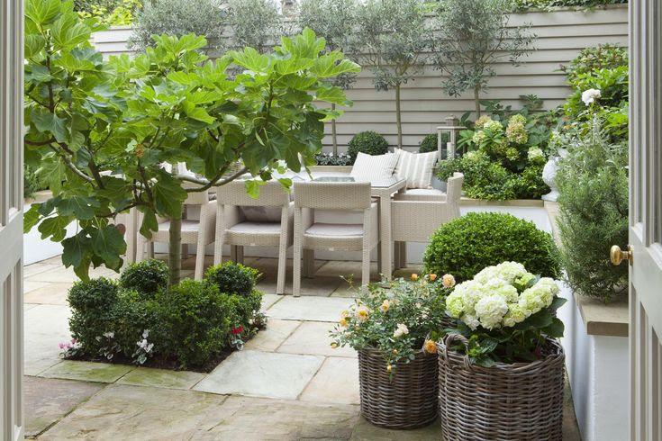 Leopoldina Haynes Garden: topiary and fig tree