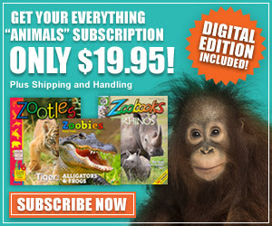 Fun for Kids of All Ages - Zookbooks