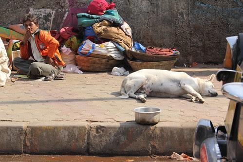 the sleeping dog i shoot each time i pass this way by firoze shakir photographerno1