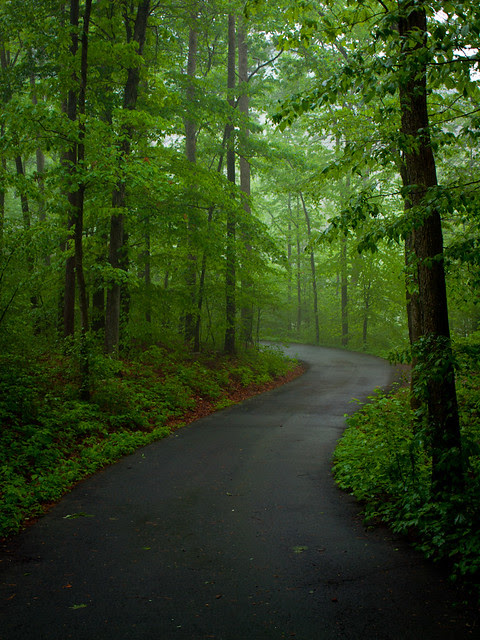 I'd rather be a forest than a street