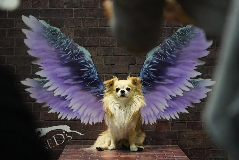 Крилата собака з Токіо