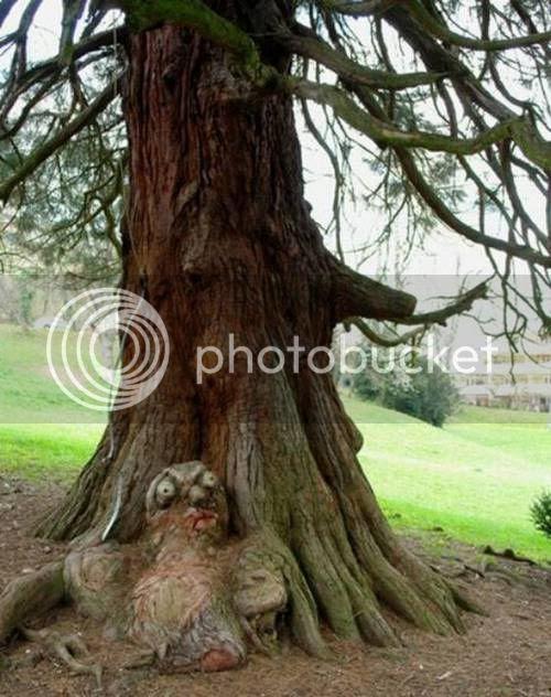 pokok pelik 4 [Gambar Pelik] Koleksi Gambar Pokok Pelik