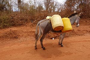 Donkey carrying water