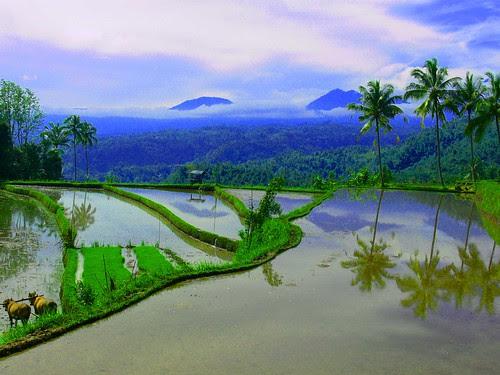 Food for the future, Organic farming takes root in post-bomb Bali por BALIwww.com.