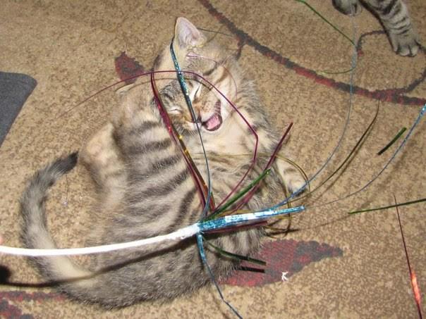 Его зовут Меркурий добро, история, коты