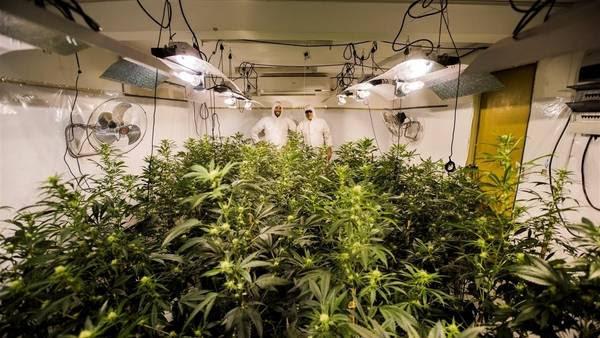 Joaquin Fonseca, presidente del Club Canabico Sativa, y su asesor técnico, Juan Vaz, posan en un invernadero de temperatura controlada de plantas de marihuana, en Montevideo./AP