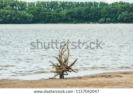 Tree root totem/abstract image with a root on the Danube island shore against the green foliage background across the river.