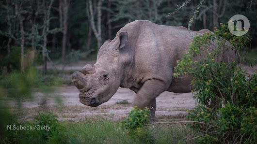 Spy-poison probe, white rhino and Stephen Hawking — the week in science
