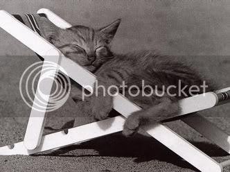 Zasluženi odmor- Mačka,Mačka spava,Mačka se sunča,Ležaljka