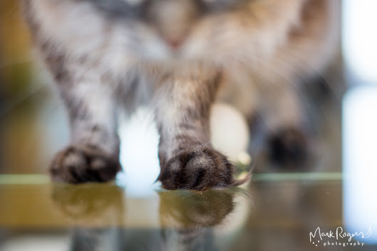 The top paws of 2015
