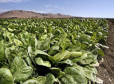 Food Poisoning Vs Food Allergy