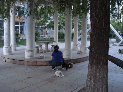 Cats in Shenyang, China _ 0124