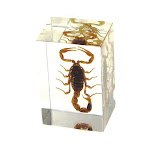 Ed Speldy East PW108 Real Bug Paperweight Regular-small-Scorpion
