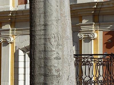 arbre gravé.jpg