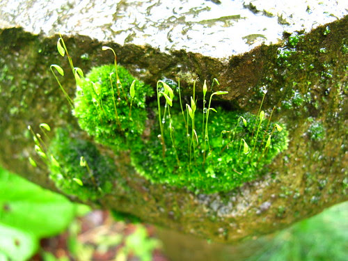 moss on the birdbath