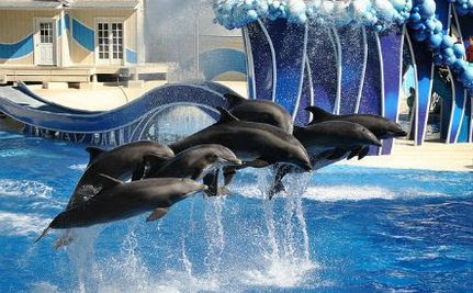 PETA Uncovers SeaWorld Employee Pretending to Be an Animal Activist