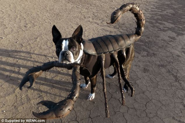 Lost in the desert: Echo could quite easily be mistaken for a scorpion in its intricately designed costume