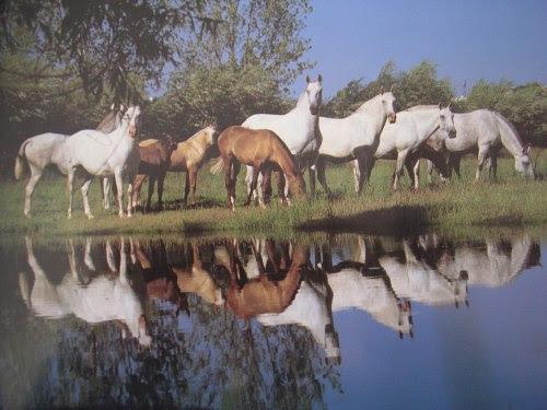 cavalos-Lezírias