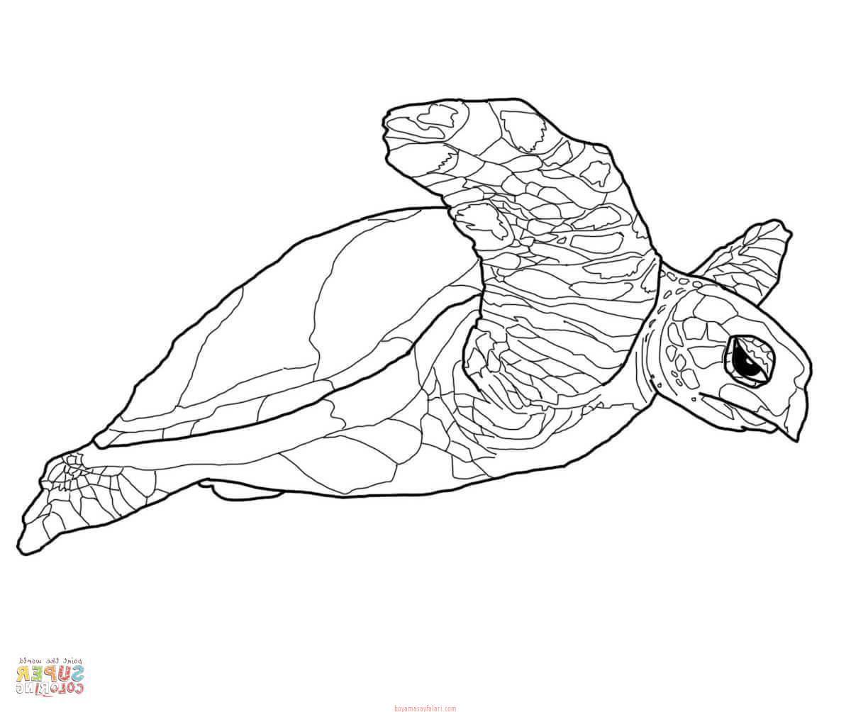 Kaplumbağa Boyama Sayfaları 7 Sınıf öğretmenleri Için ücretsiz