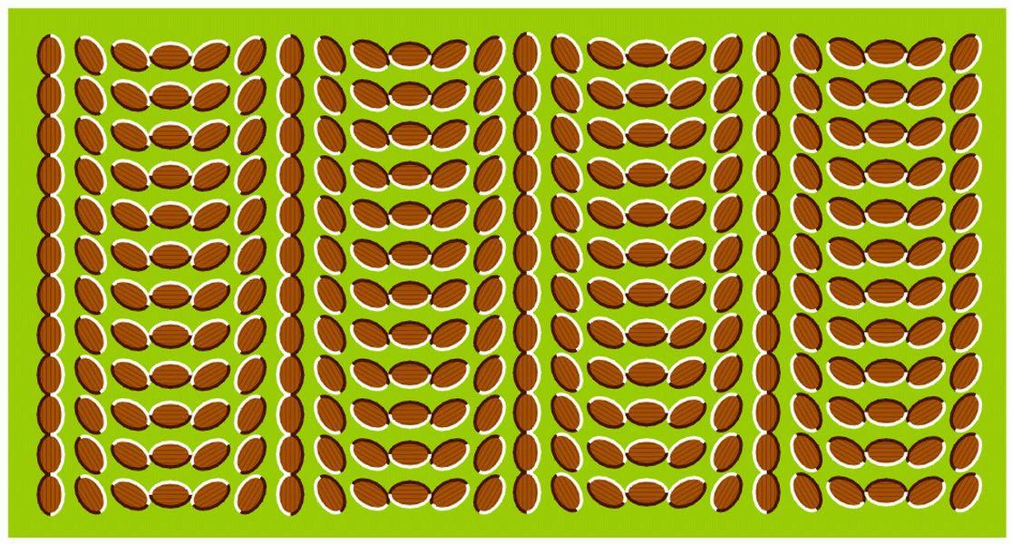 moving illusions optical eye tricks funny bing