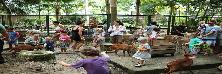 BALI ZOO PARK TOUR | TOURS TO VISIT BALINESE PRIVATE ZOO