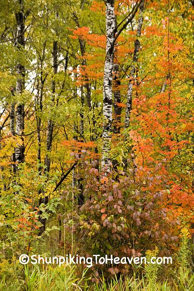 Rainy Autumn, Langlade County, Wisconsin