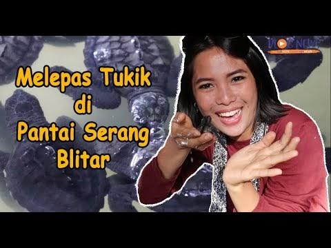 Melepas Tukik di Pantai Serang Blitar dalam Serang Culture Festival ke-5