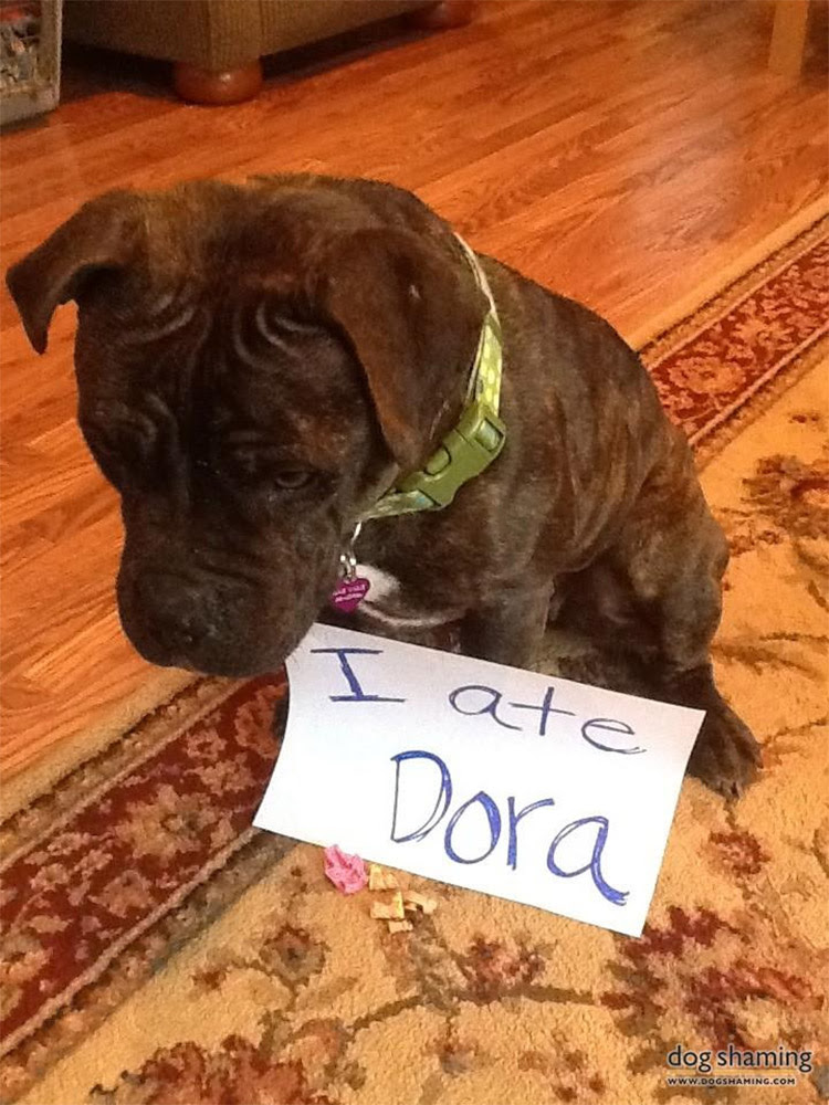 dog shaming 31 32 Hillarious Public Shaming of Dogs
