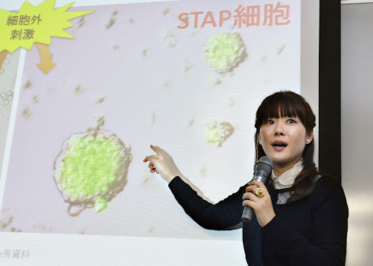 Japan lab says stem cell research falsified
