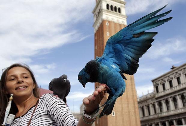Mulher alimenta pombo azul na Praça São Marcos em Veneza (Foto: Tony Gentile/Reuters)