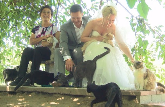 Wedding With Cats: Couple Got Married At Cat House On The Kings Cat Sanctuary