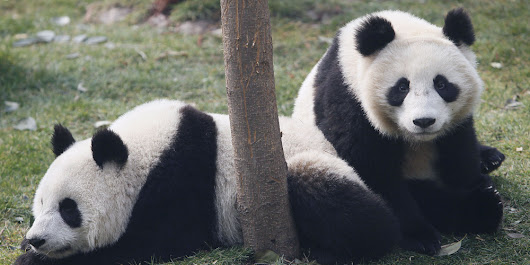3 Things Content Marketers Need to Know About Google's Panda 4.2 Update — The Content Strategist