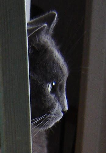 Nestor de Burma, cat by Anna Amnell
