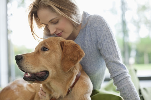 The Best Dogs for First-Time Owners