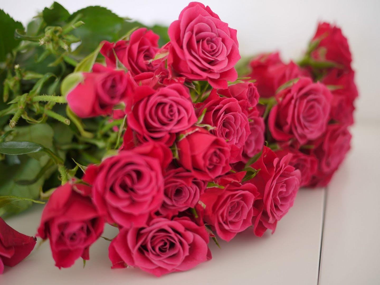 Galería De Imágenes Rosas Rosadas
