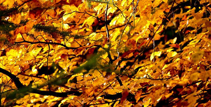 File:Autumn colours (3030599812).jpg