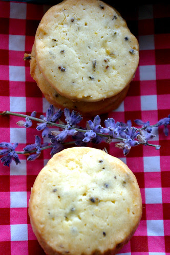 Lavender Sables