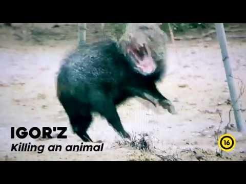 [Videotheque] IGOR'Z - Killing an animal