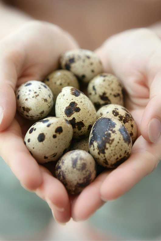 Forget The Nest Egg! The Fundamental Shift You MUST Make About Your Investment Strategy