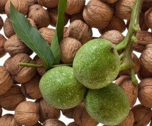 Zielone orzechy włoskie na układ pokarmowy i choroby tarczycy