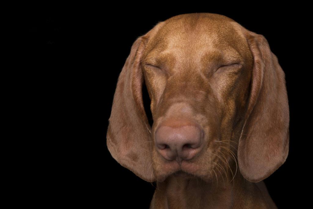 Estas fotos de cães bem Zen farão com que você se sinta Zen também 01