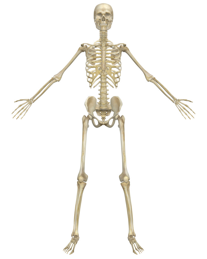 An Introduction to the Skeletal System: Bones and ...