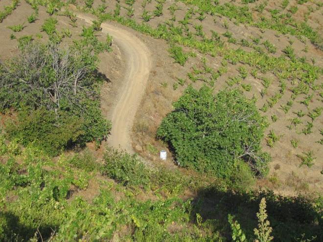 Las viejas higueras esconden una mina de agua natural