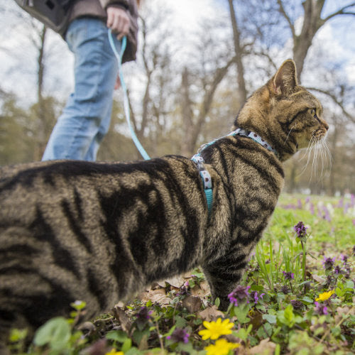 A Cat Lover's Guide on How to Walk a Cat on a Leash