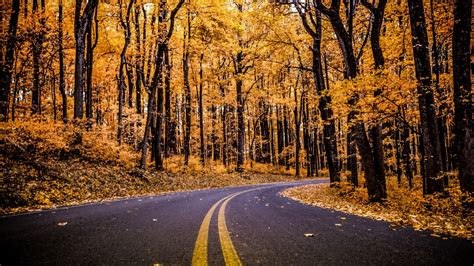 wallpaper autumn foliage forest pathway hd  nature